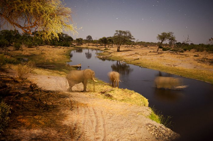 Chobe National Park - Savute Elephant Camp - Botswana