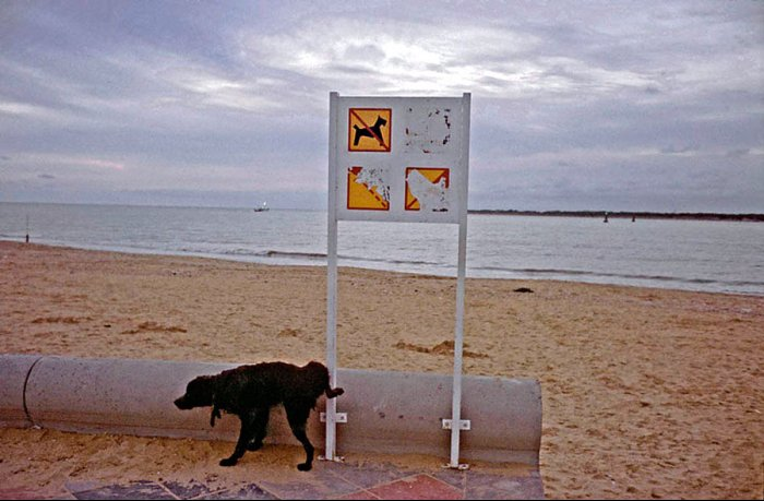 Dissident Dog - Sanlucar de Barrameda Beach - Cadiz - Spain